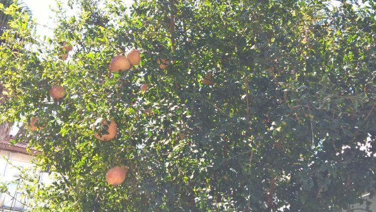 5 zile fierbinți de toamnă în Cipru   AZ Travel Tips